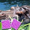 Happy Hippo Pa…